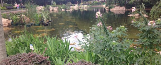 Hong Kong Park Pondluxury-off beaten path-adventure-cultural immersion